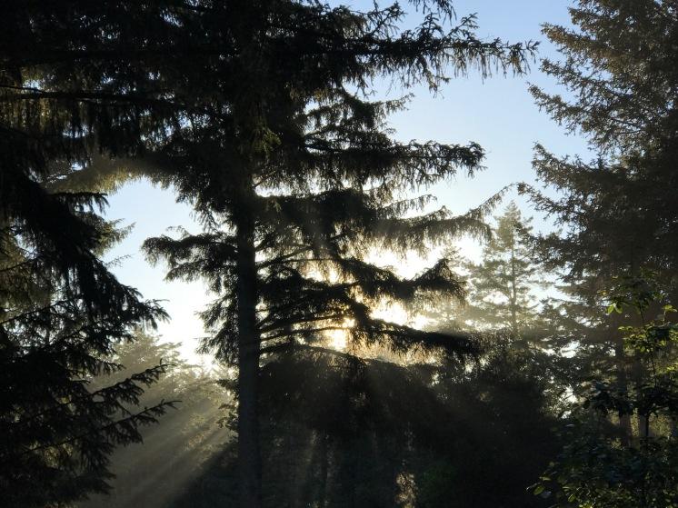 HarrisBeachTrees