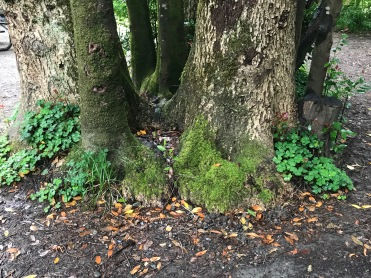 trees33