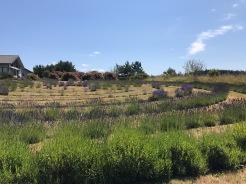 lavenderlabyrinth