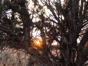 sunsetintreeCR34