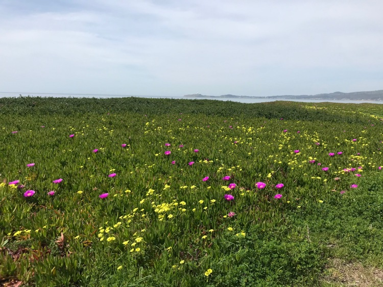wildflowershalfmoon
